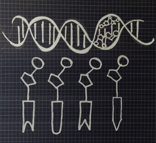 Hand drawn double helix with nucleotide detail